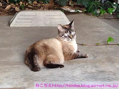 NISE_Siamese_2016-07-02 14 53 21.jpg