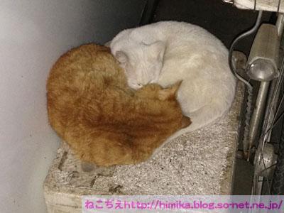 chata_shiro201512_IMG_4461.jpg