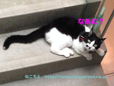 fumi_kaidan_IMG_1487.jpg