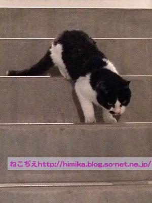 fumi_kaidan_IMG_4078.jpg