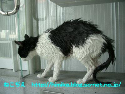fumi_wash2_CIMG8950.jpg