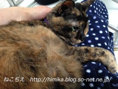 kuki_hiza_IMG_0910.jpg