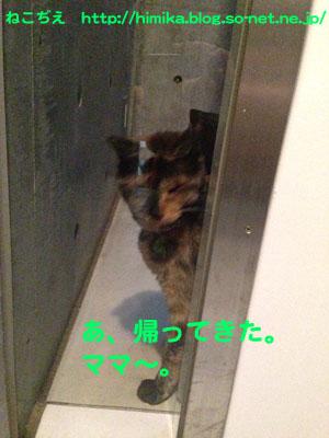 kuki_odemukae_IMG_1145.jpg