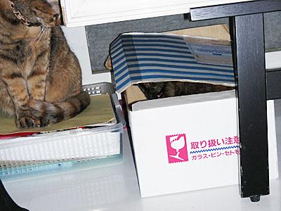 kuki_shima_box_DSCN6332.jpg