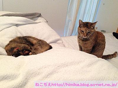 kuki_shima_dango_IMG_4909.jpg