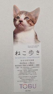 nekoaruki_IMG_0350.jpg