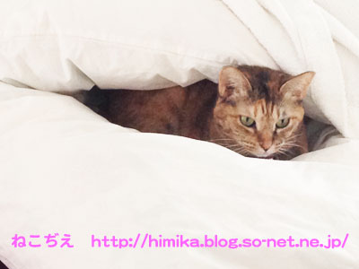 shima_futon_IMG_1808.jpg