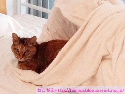 shima_korone_20160523_81450.jpg