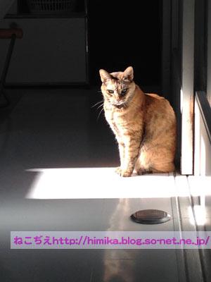 shima_light_2017-11-24 11 11 03.jpg