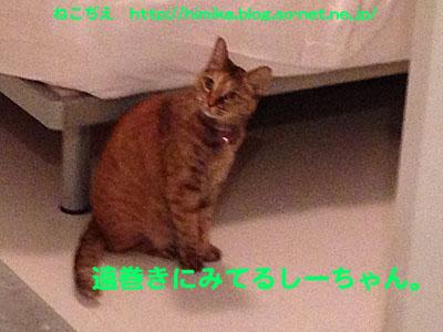 shima_tomaki_IMG_1153.jpg