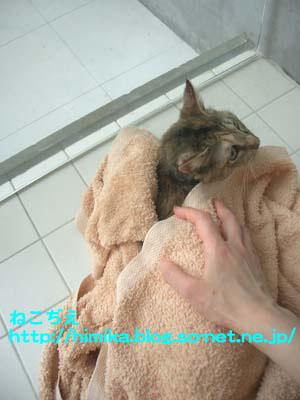 shima_wash2_CIMG8956.jpg