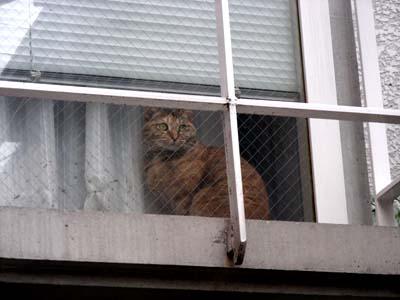shima_window_DSCN2423.jpg