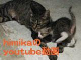 youtube_banner160.jpg