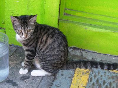 NY_cat_DSCN6977.jpg