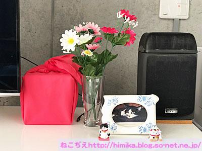 fumi_1shuki_IMG_7676.jpg
