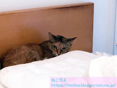 shima_makura_IMG_0026.jpg