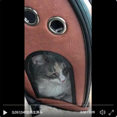 yabai_cat.jpg